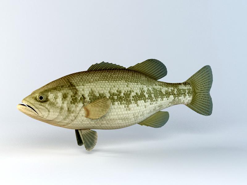 Black Bass Fish 3d rendering