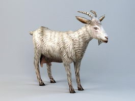 Low Poly Goat 3d preview