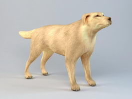 Boxer Dog 3d model preview