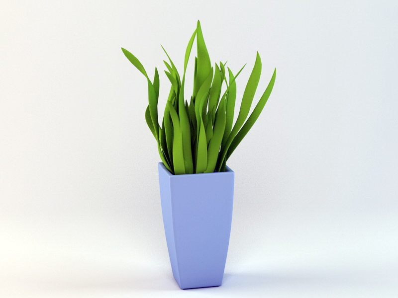 House Plant 3d rendering