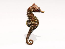 Brown Seahorse 3d preview