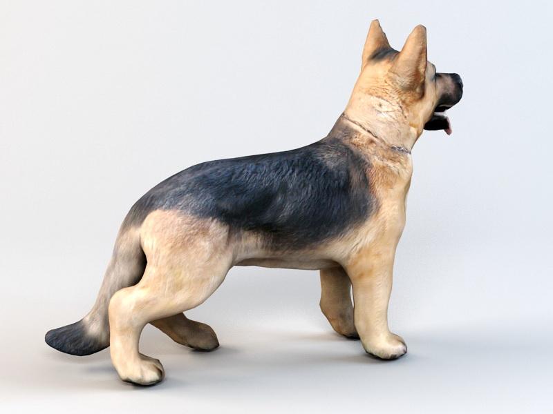 German Shepherd 3d rendering