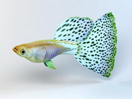 Japanese Guppy Blue Grass Tail 3d preview