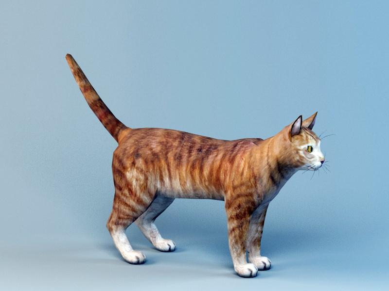 Orange Shorthair Tabby 3d rendering