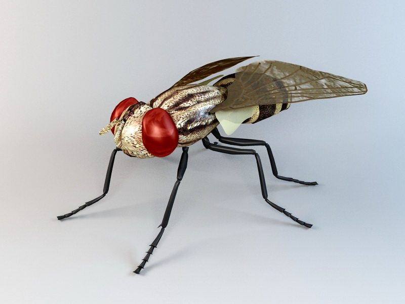 Anthomyiid Fly 3d rendering