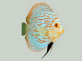 Discus Fish 3d preview