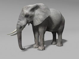 Grey Elephant 3d preview