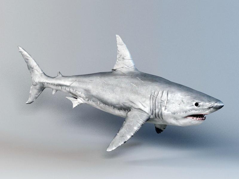 Great White Shark 3d rendering