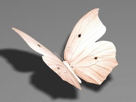Beige Butterfly 3d preview