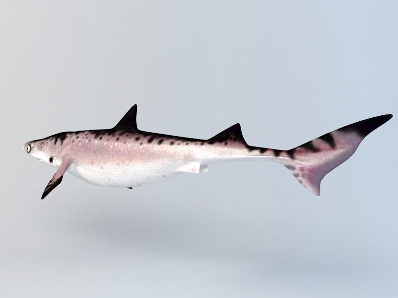 Cat Shark Rig 3d rendering