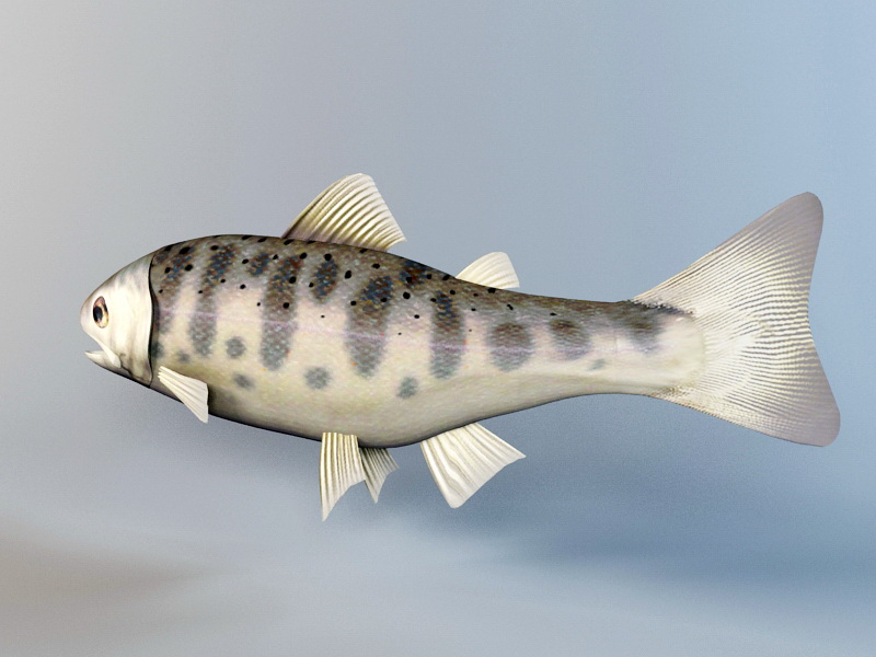 Trout Fish Rig 3d rendering