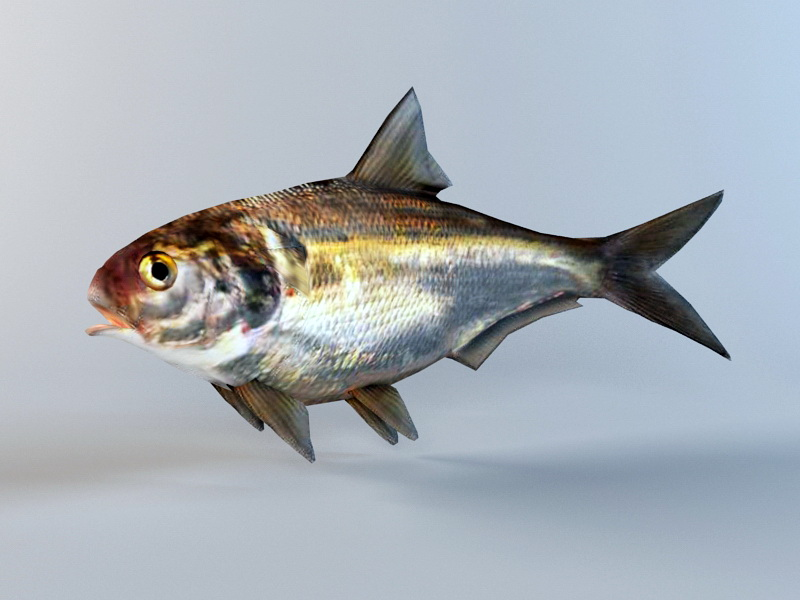 Animated Shad Fish Rig 3d rendering
