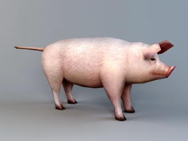 Low Poly Domestic Pig 3d preview