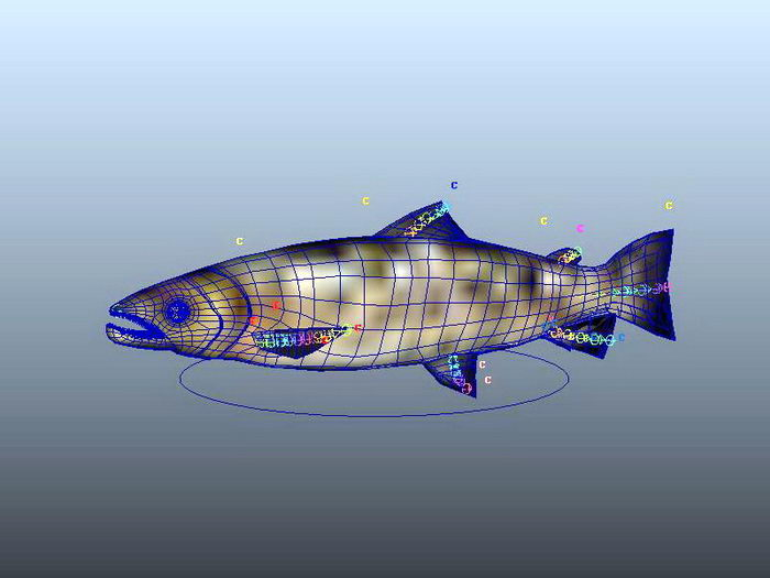 Salmon Fish Rig 3d rendering