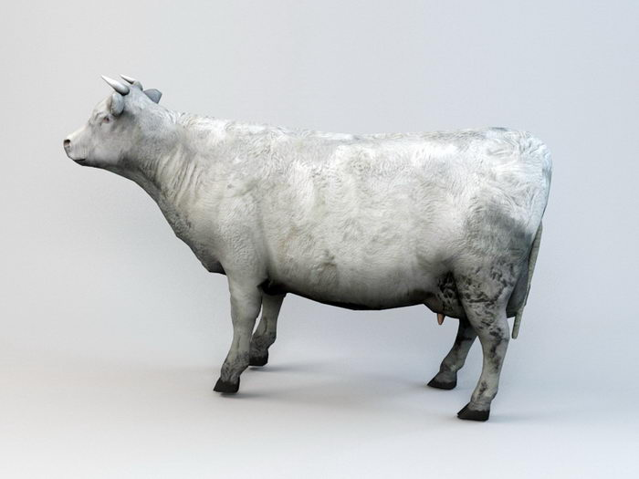 Farm Cow Animated Rig 3d rendering