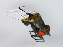 Housefly 3d model preview
