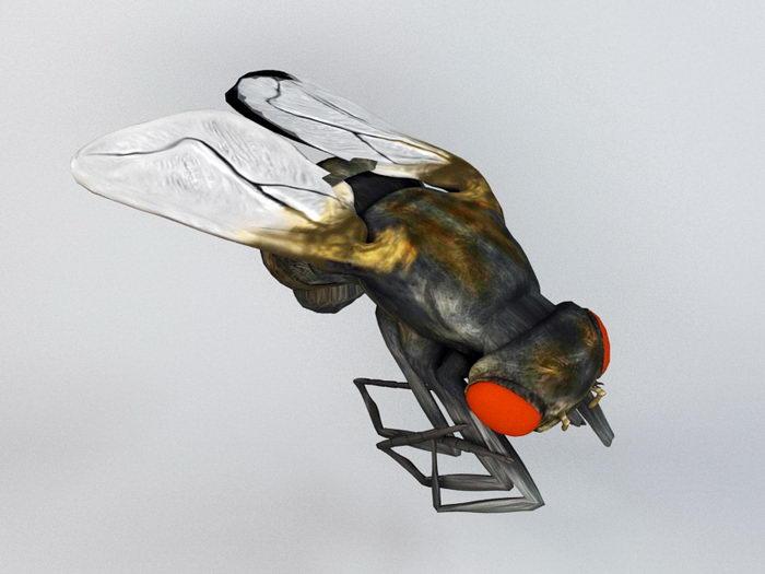 Housefly 3d rendering