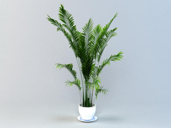 Areca Palm Potted Plant 3d rendering
