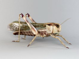 Garden Locust 3d preview