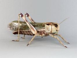 Garden Locust 3d model preview