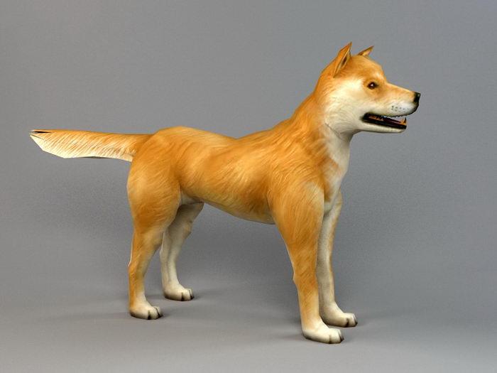 Akita Dog Biped Bones 3d rendering