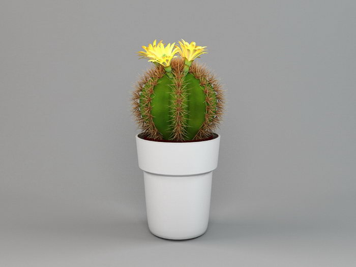 Potted Cactus Plant 3d rendering