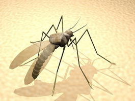 Mosquito Bites 3d model preview
