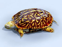 Box Turtle 3d preview