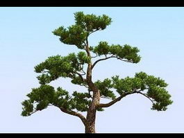 Japanese Pine Tree 3d preview
