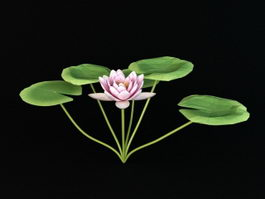 Nymphaeaceae Water Lily 3d preview