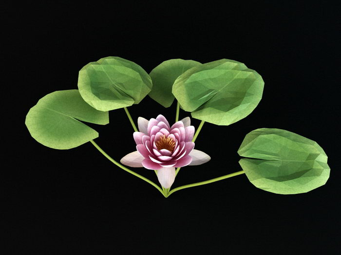 Nymphaeaceae Water Lily 3d rendering