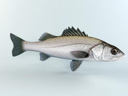 Striped Bass Fish 3d preview