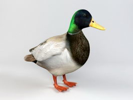 Dabbling Duck 3d preview