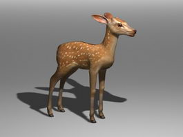 Deer Fawn 3d preview