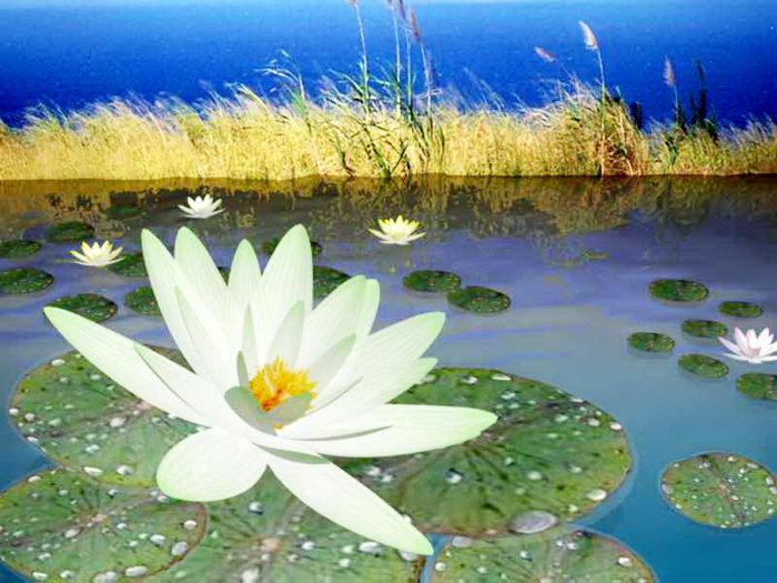 Lotus Flowers Pond 3d rendering