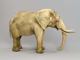African Elephant 3d model preview
