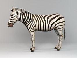 African Zebra 3d preview
