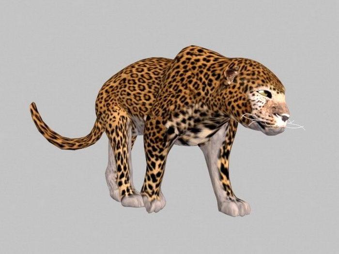 Cheetah Animal 3d rendering