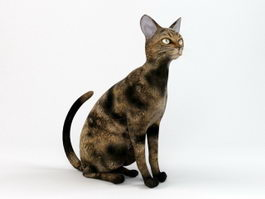 European Shorthair Cat 3d model preview