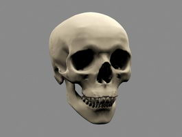 Human Skull 3d preview