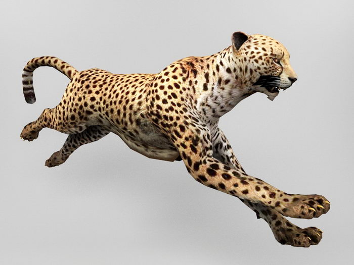 Animated Leopard Rig 3d rendering