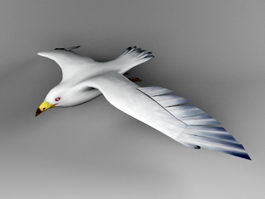 Silver Gull 3d preview