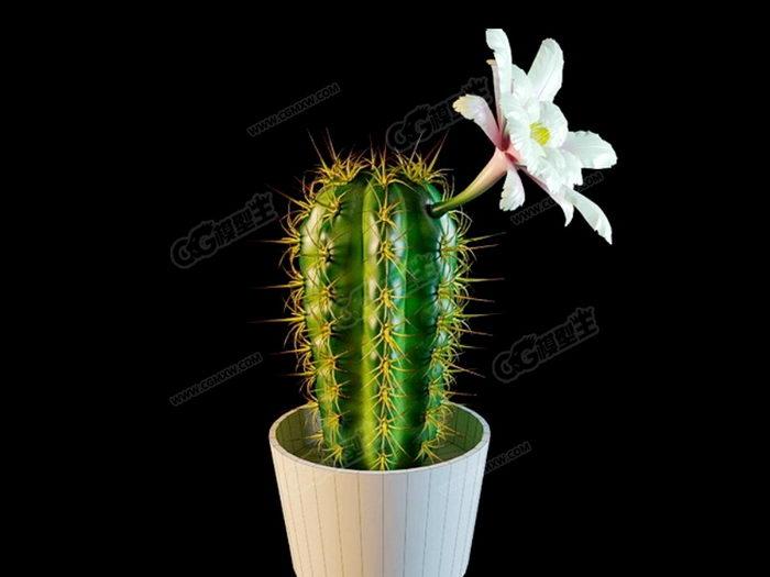 Blooming Cactus 3d rendering