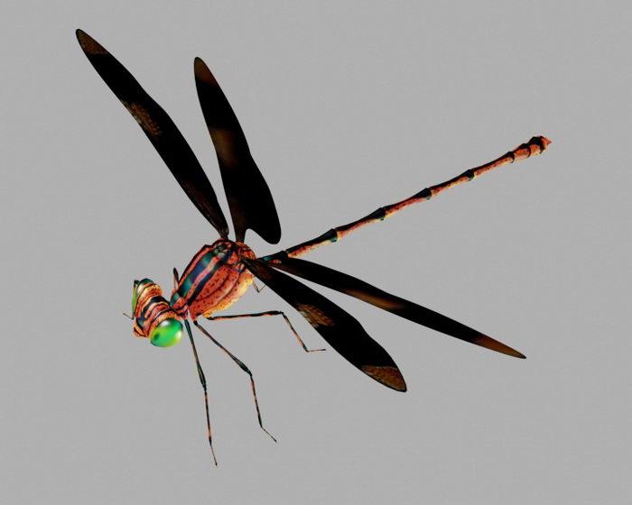 Brown Dragonfly 3d rendering