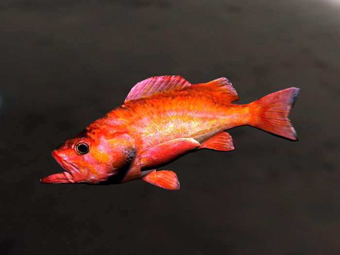 Animated Rockfish Rig 3d rendering