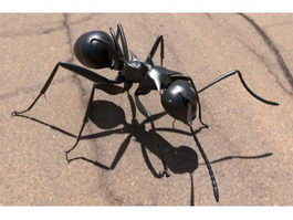 Black Ant 3d preview