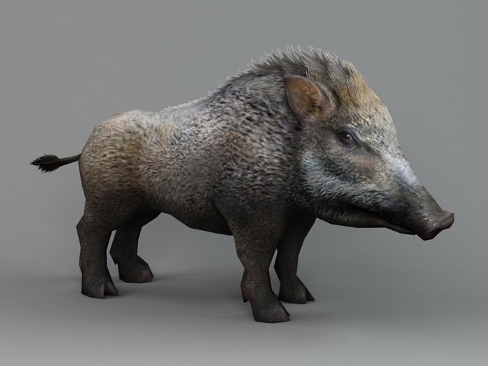 Male Wild Boar 3d rendering