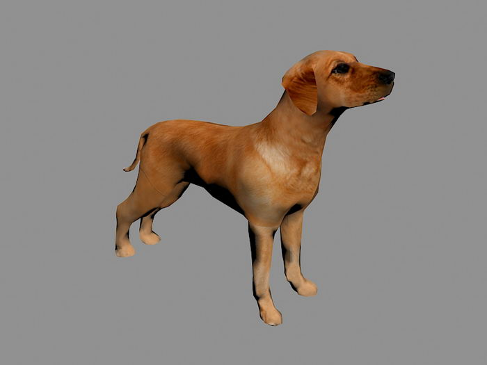 Tan Dog 3d rendering