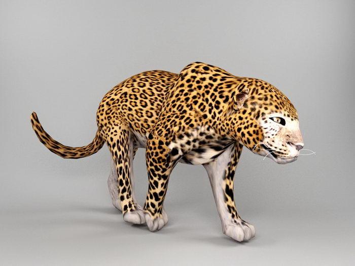 Jaguar Animal 3d rendering