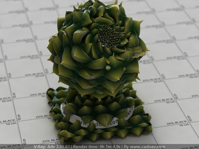 Cactus Plant material rendering